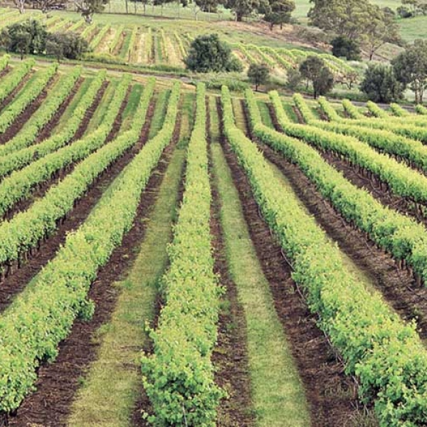 Δρόμοι κρασιού στη Νεμέα